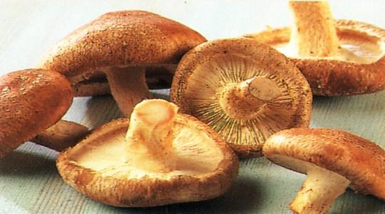 hongos-shiitake